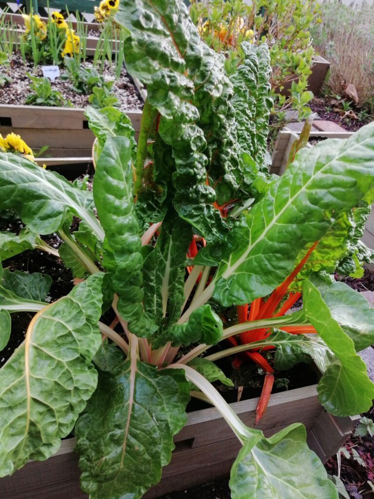 Swiss chard is good for the environment
